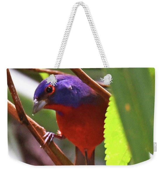 Weekender Tote Bag featuring the photograph Such A Pretty Boy by Sally Sperry