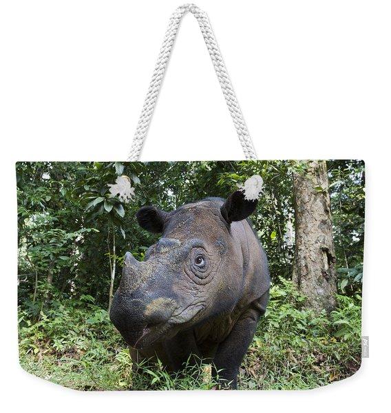 Sumatran Rhinoceros Sumatran Rhino Weekender Tote Bag