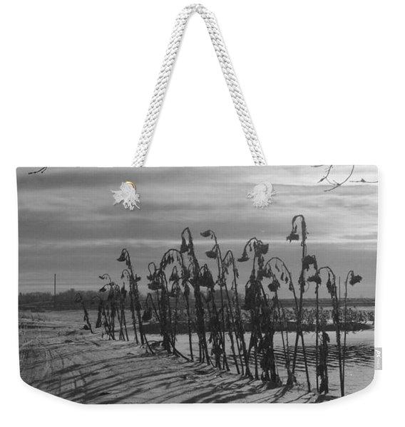 Sunflowers In The Winter Sun Weekender Tote Bag