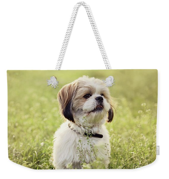 Sute Small Dog Weekender Tote Bag