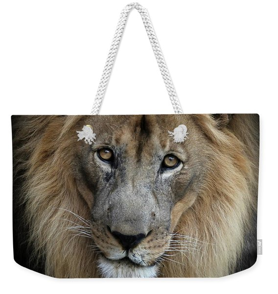 Sweet Male Lion Portrait Weekender Tote Bag