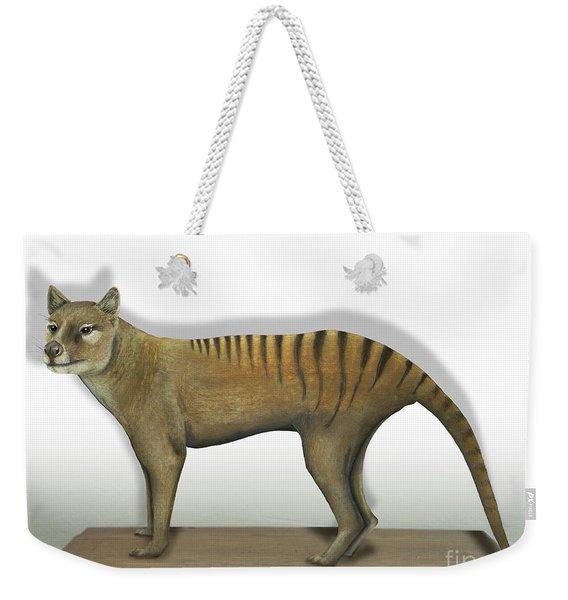 Tasmanian Tiger-thylacinus Cynocephalus-tasmanian Wolf-lobo De Tasmania-tasmanian Loup-beutelwolf    Weekender Tote Bag