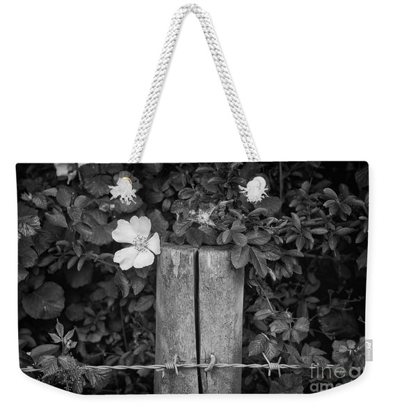 Weekender Tote Bag featuring the photograph The Allotment Project - Dog Rose by Clayton Bastiani