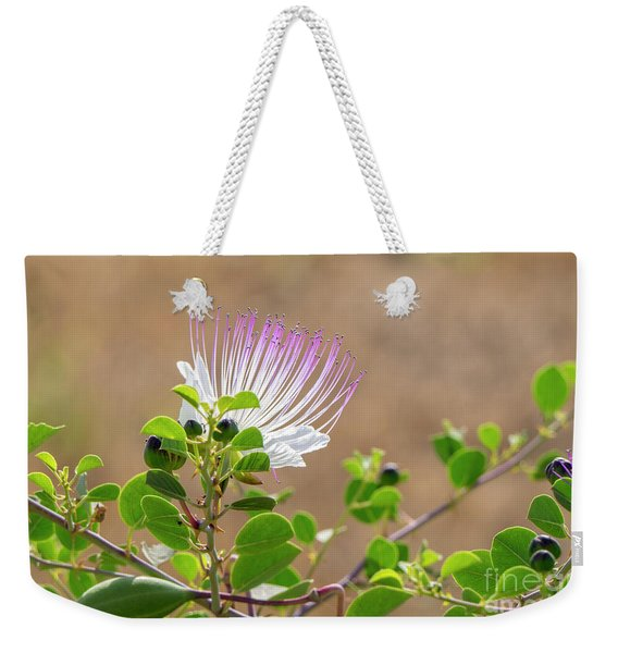 Weekender Tote Bag featuring the photograph The  Caper Flower Blossoms. by Arik Baltinester