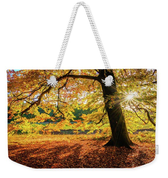 Weekender Tote Bag featuring the photograph The Last Rays Of Golden Autumn by Dmytro Korol