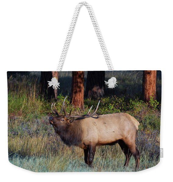 Weekender Tote Bag featuring the photograph The Stare by John De Bord