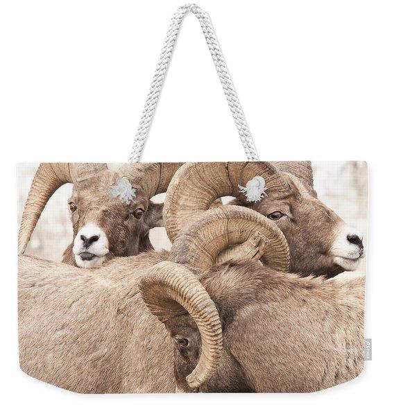 Three Bighorn Rams Weekender Tote Bag
