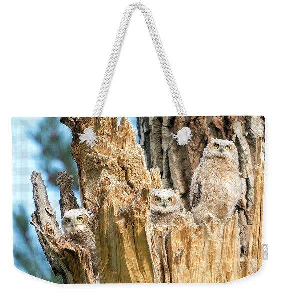 Three Great Horned Owl Babies Weekender Tote Bag