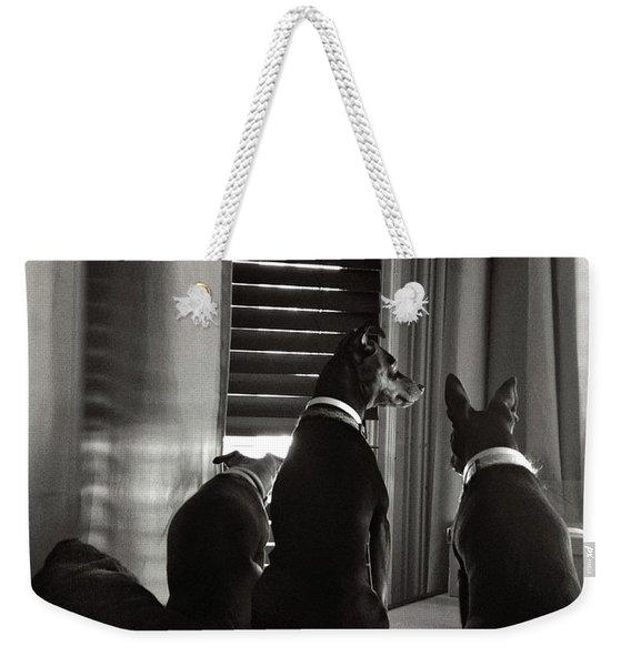 Three Min Pin Dogs Weekender Tote Bag