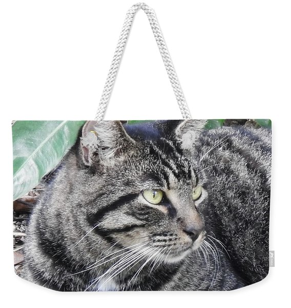 Weekender Tote Bag featuring the photograph Thrinax by Sally Sperry