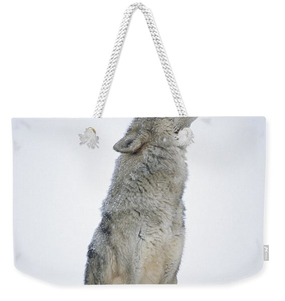 Timber Wolf Portrait Howling In Snow Weekender Tote Bag