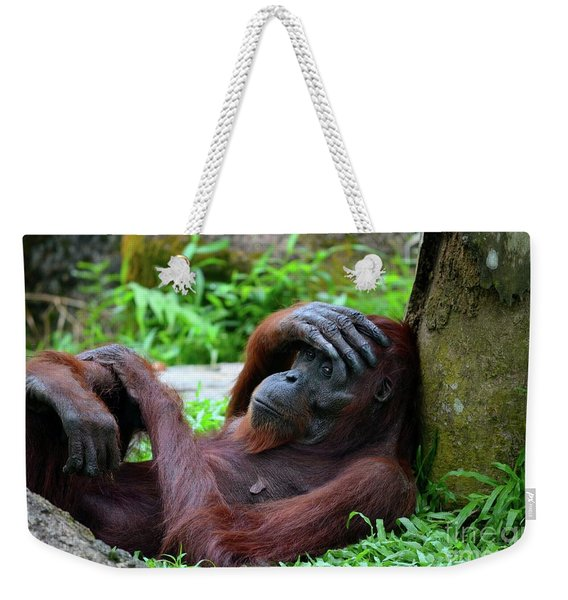 Tired Female Orangutan Ape Rests Against Tree With Hand On Her Head Weekender Tote Bag