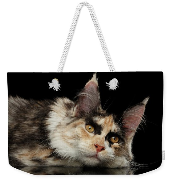Tired Maine Coon Cat Lie On Black Background Weekender Tote Bag