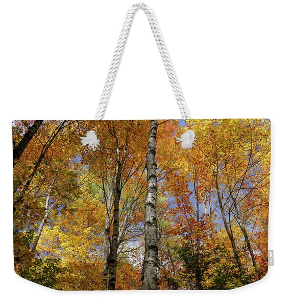 Weekender Tote Bag featuring the photograph Trees On The Lincoln Woods Trail by Nancy De Flon