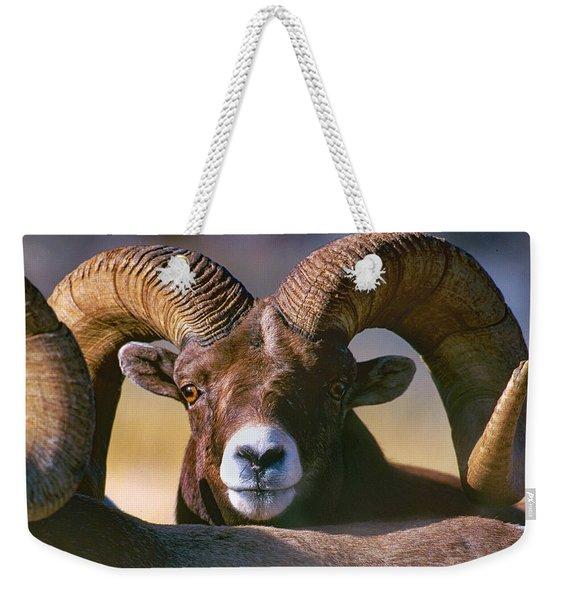 Trophy Bighorn Ram Weekender Tote Bag