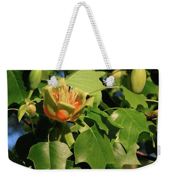 Tulip Poplar Weekender Tote Bag