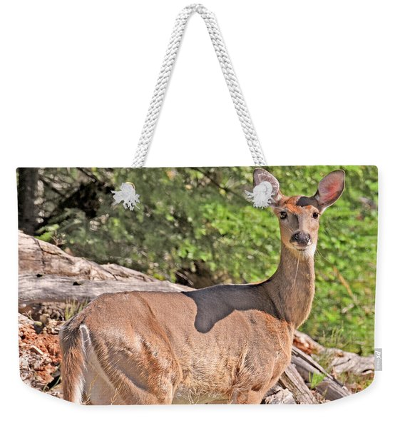 Weekender Tote Bag featuring the photograph Turn Coat by Sally Sperry