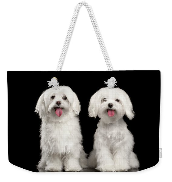Two Happy White Maltese Dogs Sitting, Looking In Camera Isolated Weekender Tote Bag