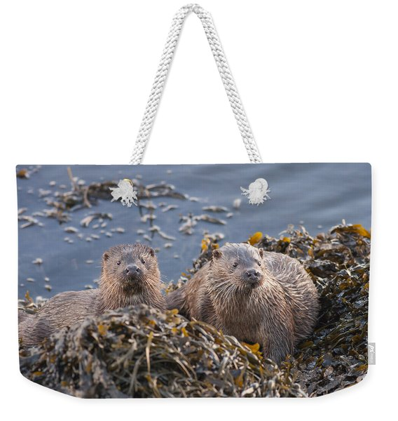 Two Young European Otters Weekender Tote Bag