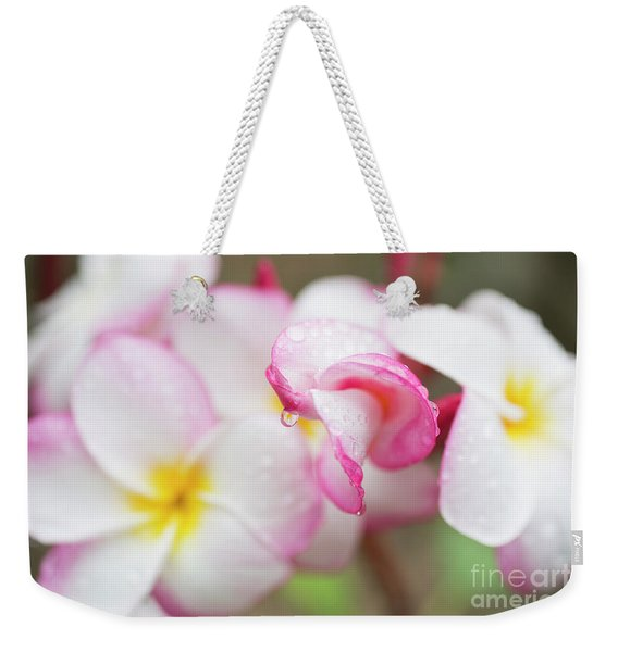 Weekender Tote Bag featuring the photograph Unfolding Plumeria Blossom by Charmian Vistaunet