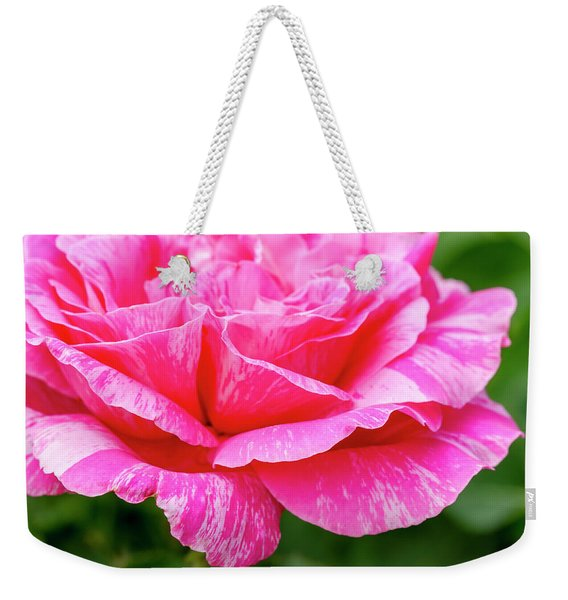 Variegated Pink And White Rose Petals Weekender Tote Bag