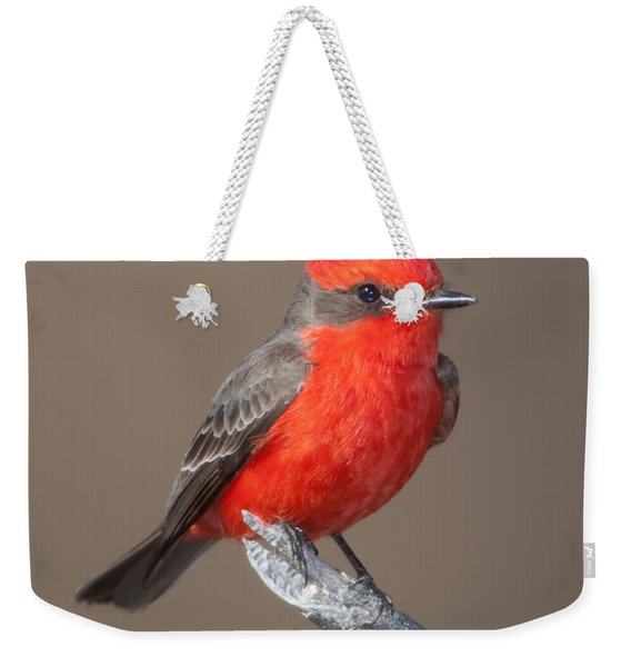 Vermilion Flycatcher Weekender Tote Bag