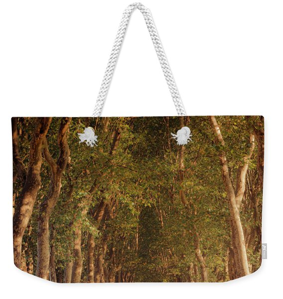 Warm French Tree Lined Country Lane Weekender Tote Bag
