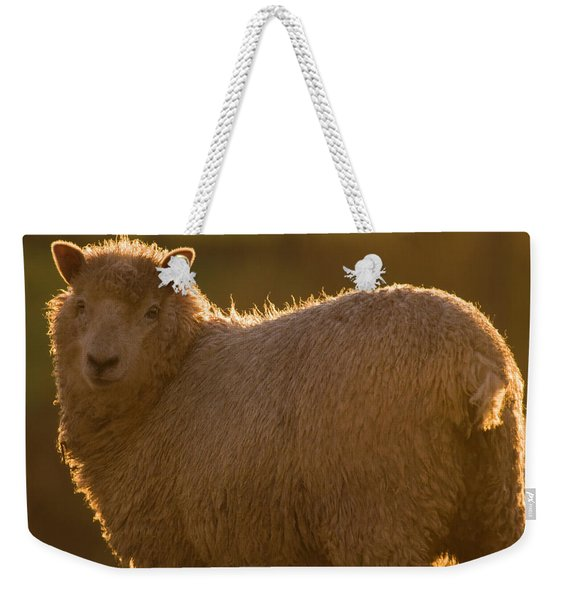 Welsh Lamb In Sunny Sauce Weekender Tote Bag