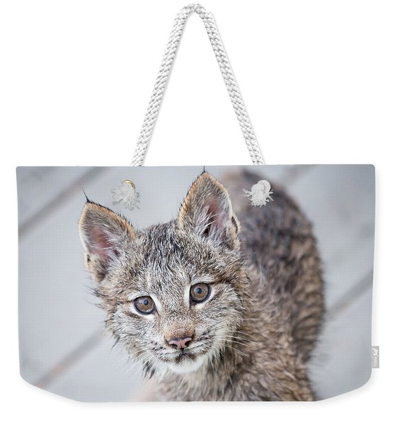 Weekender Tote Bag featuring the photograph What Are You by Tim Newton