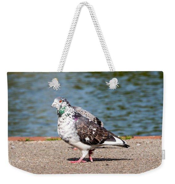 White-gray Pigeon Weekender Tote Bag