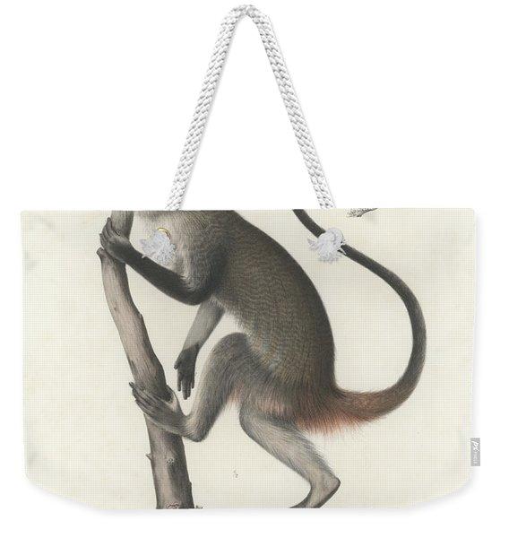 White Throated Guenon, Cercopithecus Albogularis Erythrarchus Weekender Tote Bag