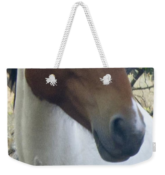 Weekender Tote Bag featuring the photograph Wild Horses Of Nevada 2  by Catherine Sobredo