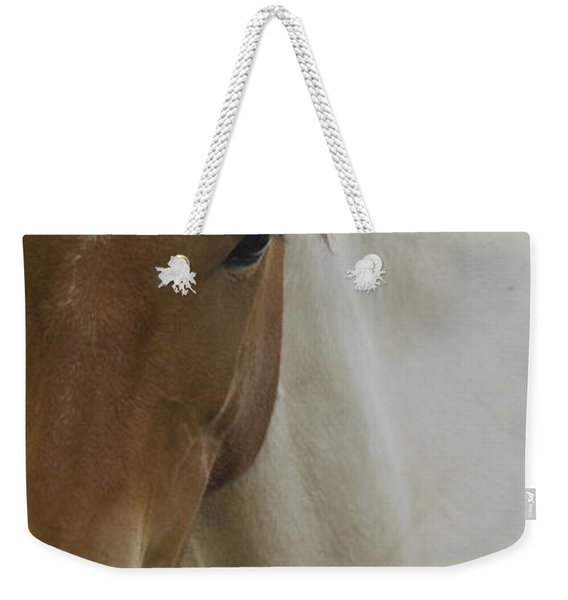 Weekender Tote Bag featuring the photograph Wild Horses Of Nevada 3 by Catherine Sobredo
