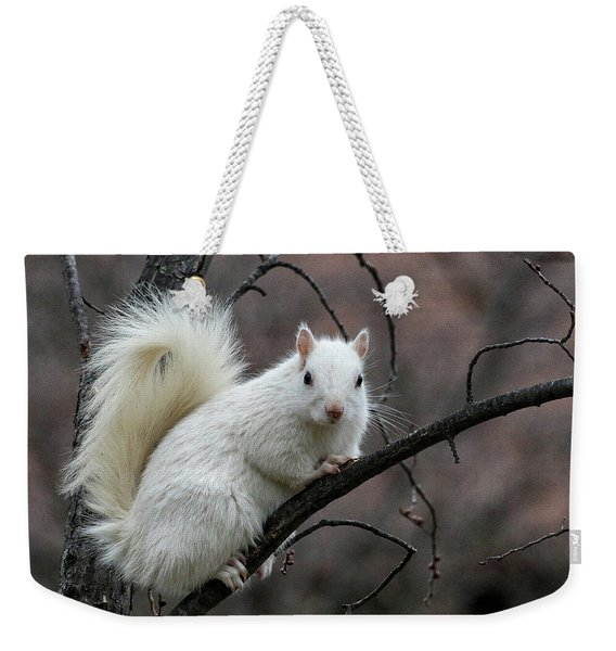 Weekender Tote Bag featuring the photograph Winter Squirrel by William Selander