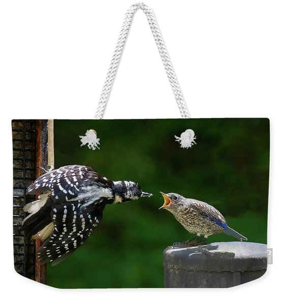 Woodpecker Feeding Bluebird Weekender Tote Bag