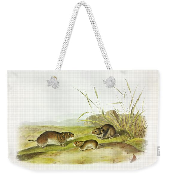 Yellow-cheeked Meadow-mouse Weekender Tote Bag