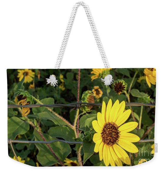Yellow Flower Escaping From A Barb Wire Fence Weekender Tote Bag