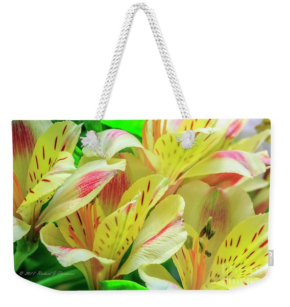 Weekender Tote Bag featuring the photograph Yellow Peruvian Lilies In Bloom by Richard J Thompson