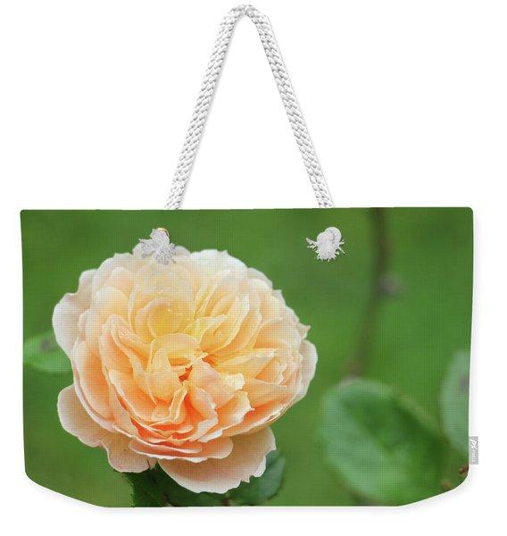 Yellow Rose In December Weekender Tote Bag