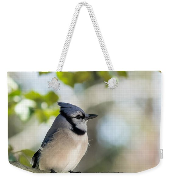 Young Blue Jay Profile Weekender Tote Bag