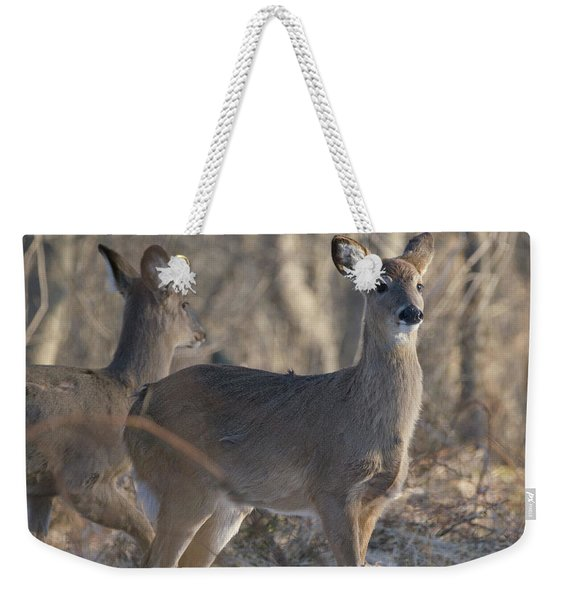 Young Deer In A Pack Weekender Tote Bag