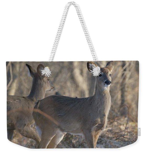 Young Deer In A Pack Weekender Tote Bag