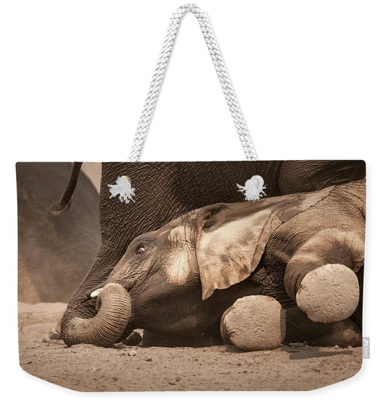 Young Elephant Lying Down Weekender Tote Bag