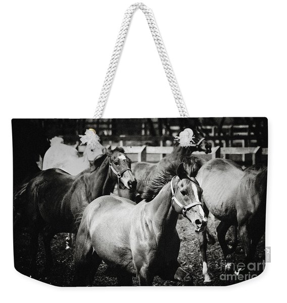 Young Horses On The Pasture Weekender Tote Bag