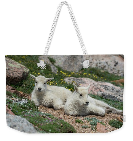 Young Mountain Goats Weekender Tote Bag