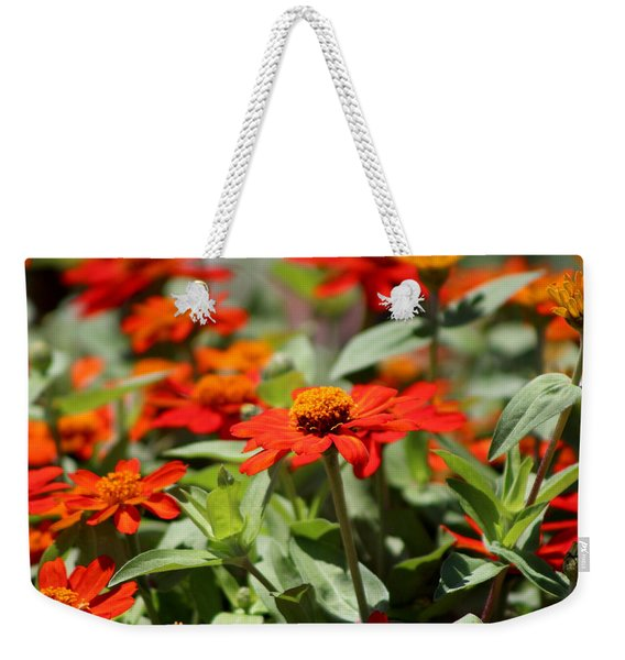 Zinnias In Autumn Colors Weekender Tote Bag