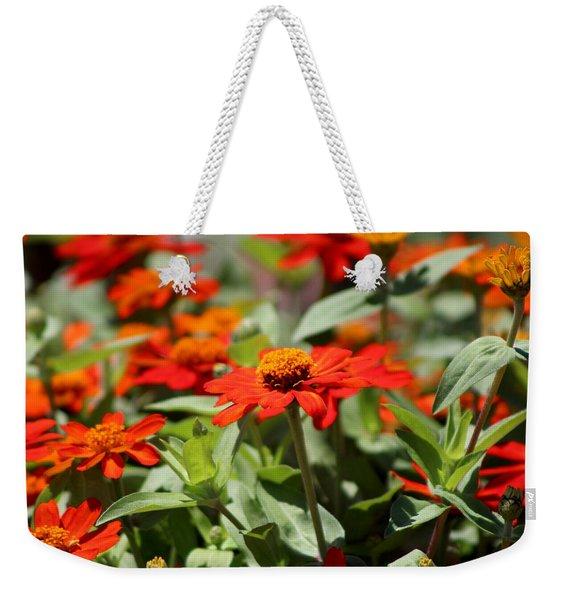 Zinnias In Autumn Colors Weekender Tote Bag
