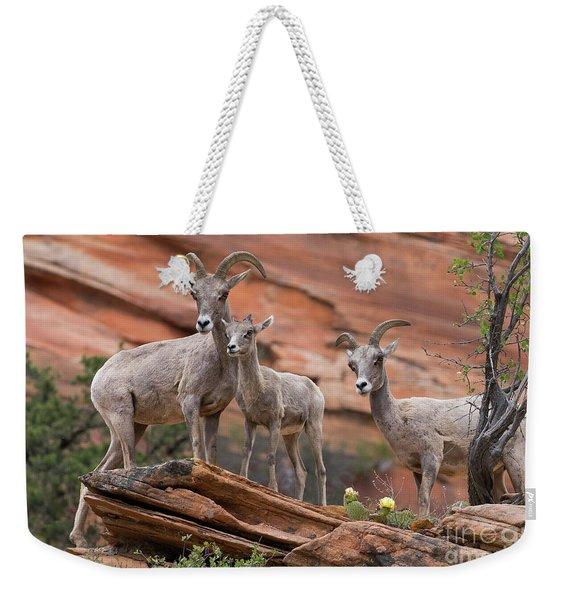 Zion Big Horn Sheep Weekender Tote Bag