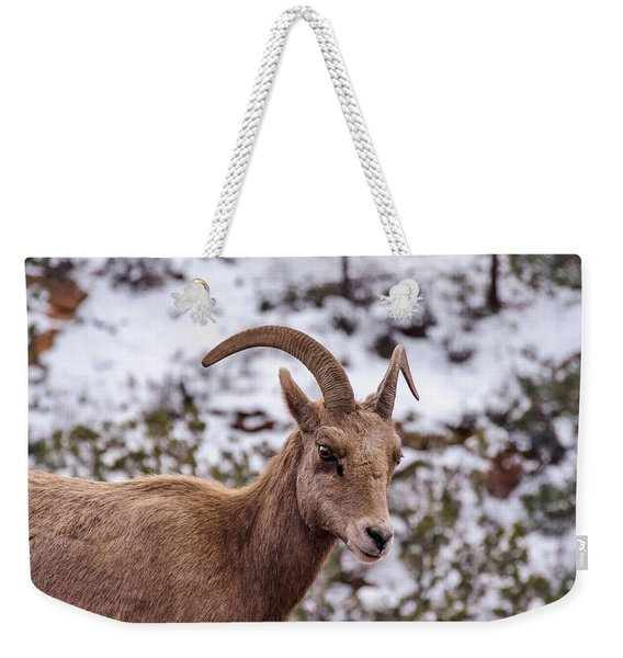 Zion Bighorn Sheep Close-up Weekender Tote Bag