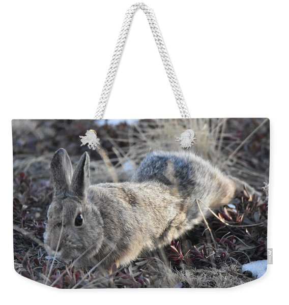 Weekender Tote Bag featuring the photograph 02-27-18 Rabbit by Margarethe Binkley
